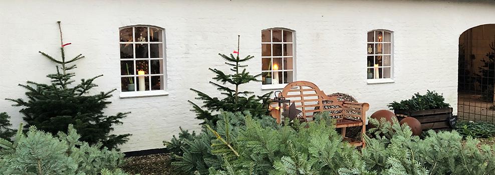 Bænk og Juletræer på pigstensgårdsplads
