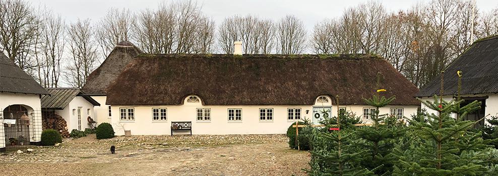 Den smukke gårdsplads på Holdflod hvor de nyskovede juletræer står