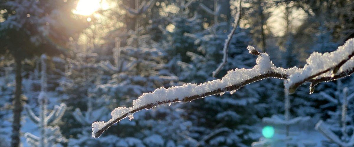 Modlys skov i sne
