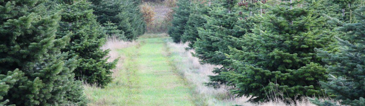 skov m vej